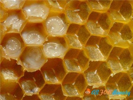 Финансовая аналитика и пчелиное маточное молочко