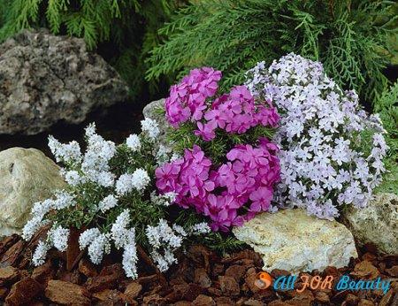 Маленькие Альпы в вашем саду