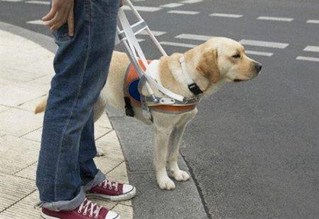 Собаки-поводыри и благотворительная помощь